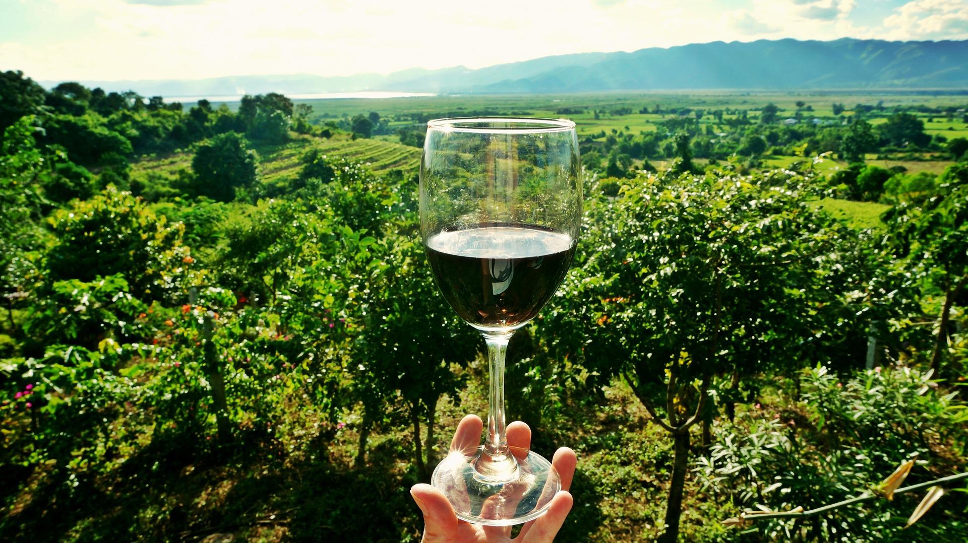 wine-2173239_1920